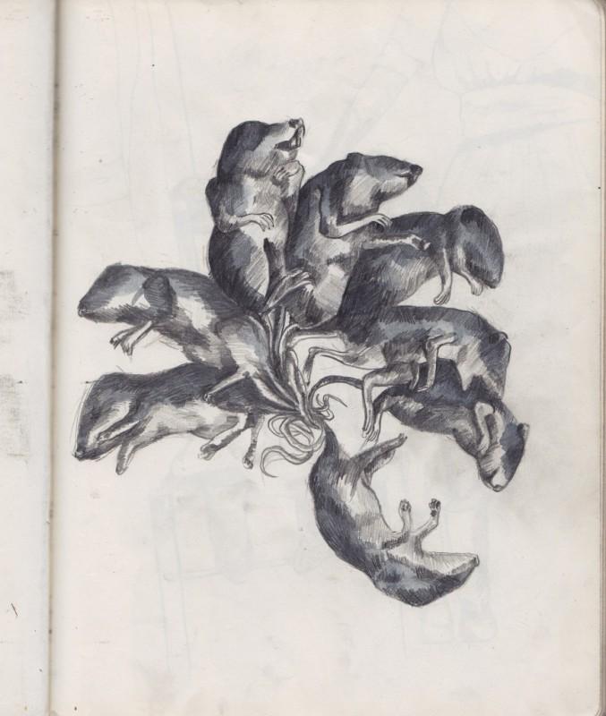 Sketch RatKing